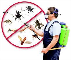 شركة مكافحة الحشرات بصفوى