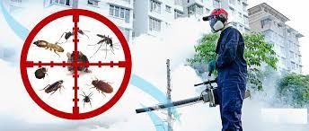 شركة رش حشرات بالخبر